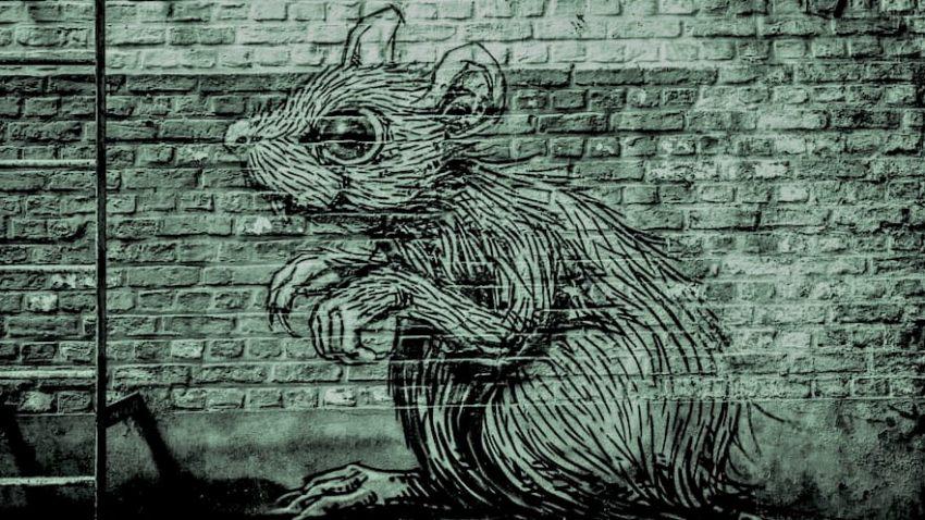 Causa de la fobia a las ratas