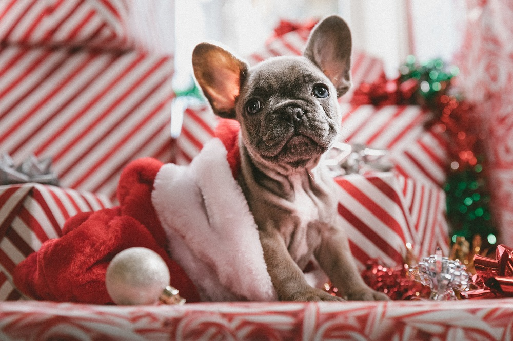 cachorro dentro de un calcetín de navidad con regalos de rayas blancas y rojas alrededor que está pensando en cómo superar la tristeza en navidad